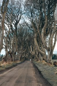 dark hedges irlanda del nord